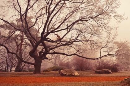 Property of the season - Fall 2014